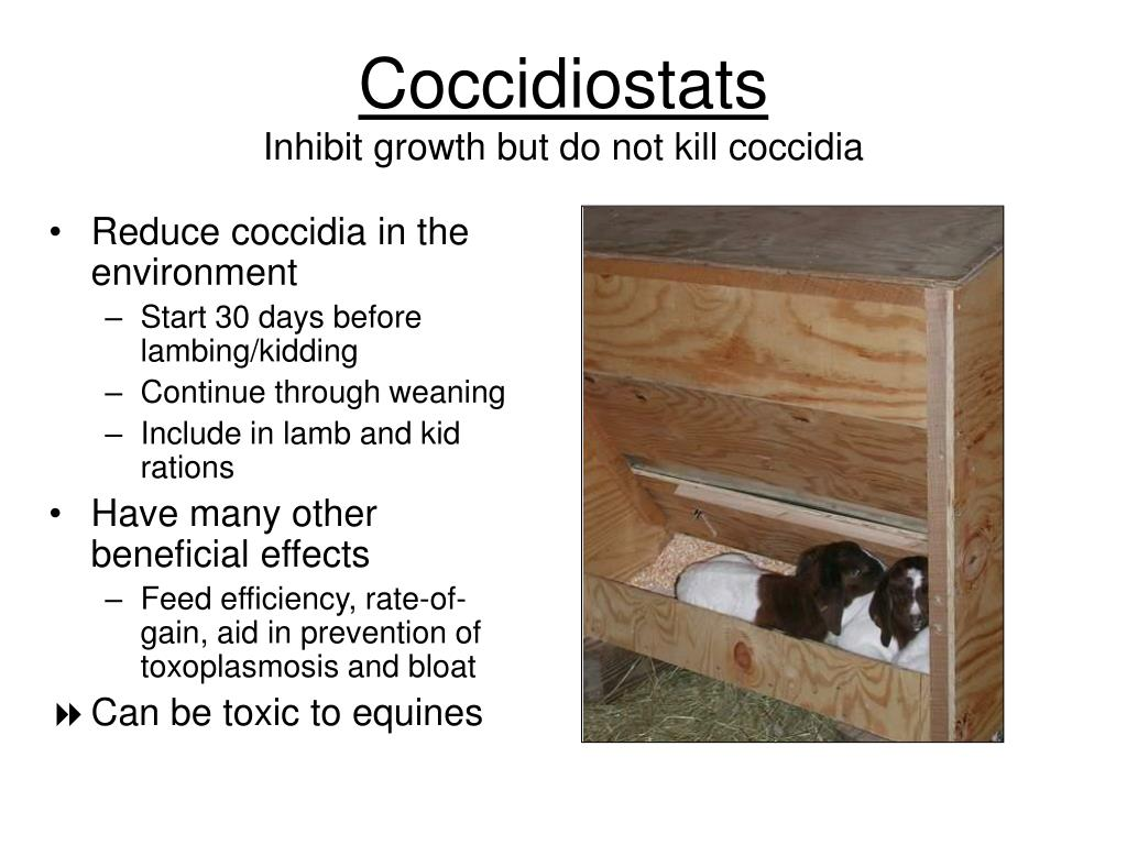 Reduce coccidia in the environment