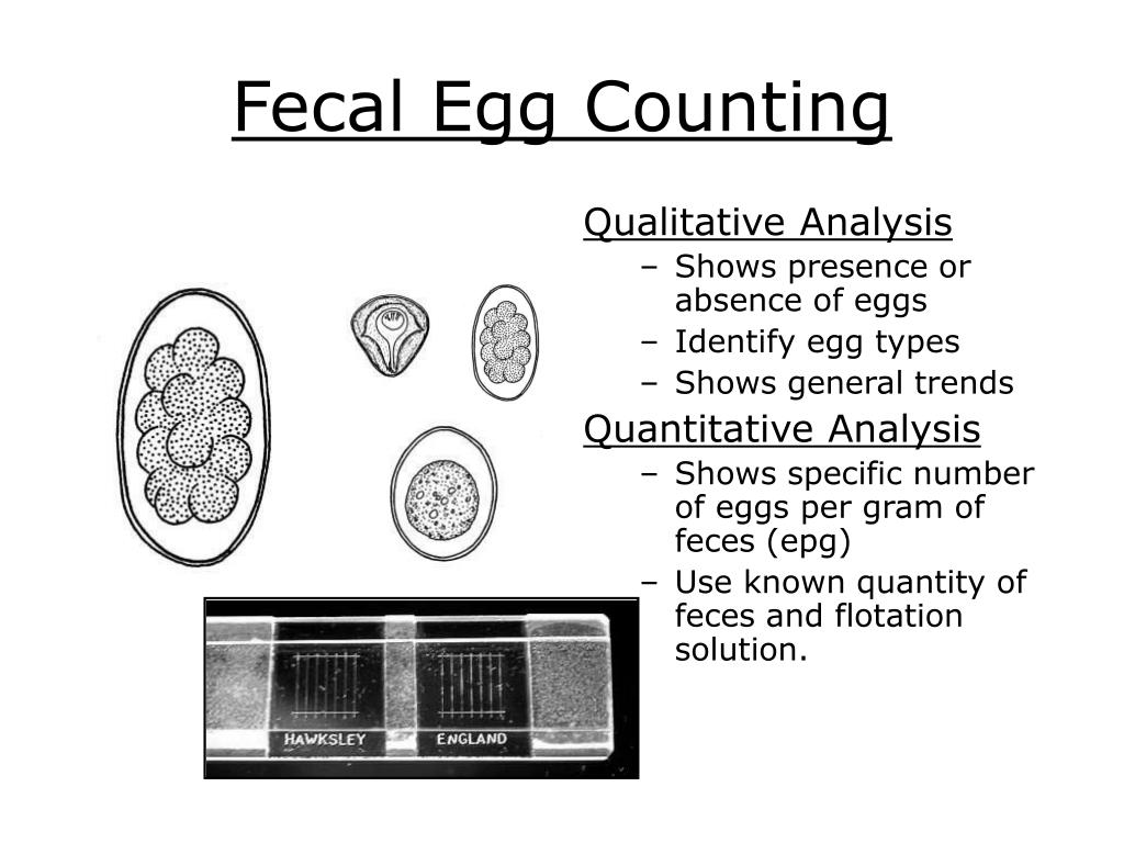 Fecal Egg Counting