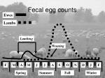 fecal egg counts