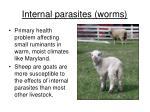 internal parasites worms