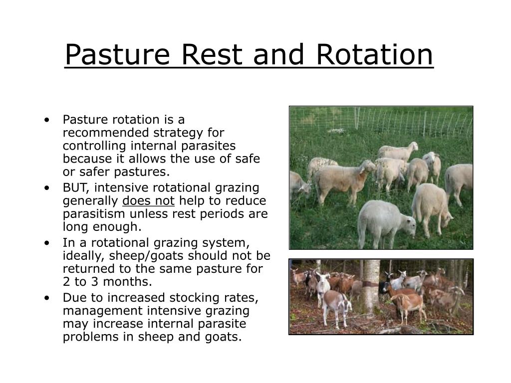 Pasture Rest and Rotation