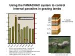 using the famacha system to control internal parasites in grazing lambs
