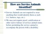 how are service animals identified