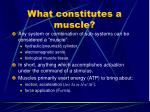what constitutes a muscle