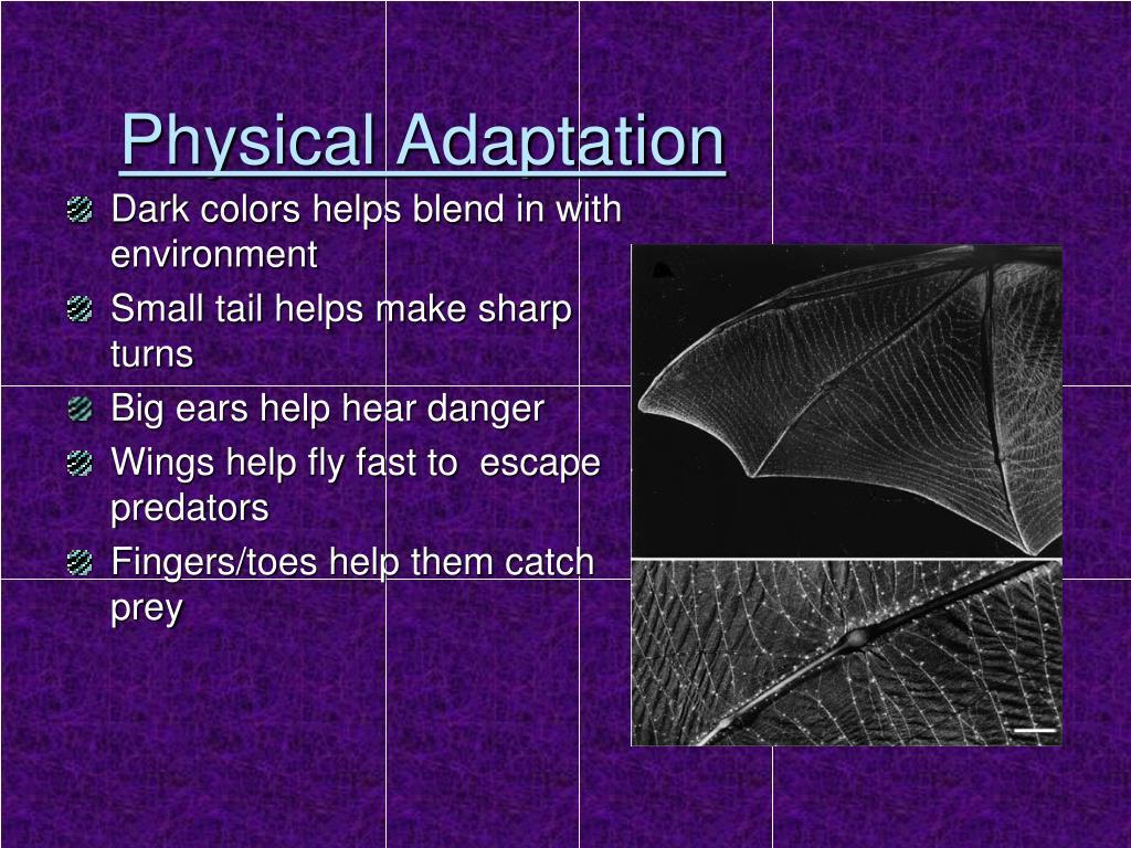 Physical Adaptation