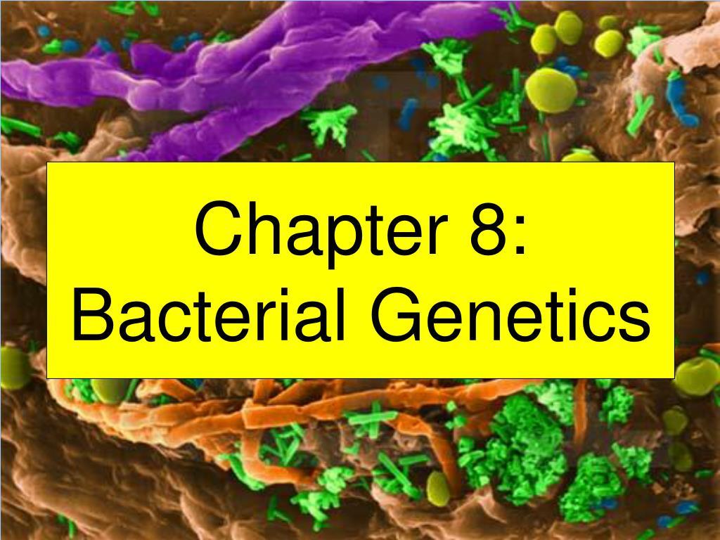 chapter 8 bacterial genetics l.