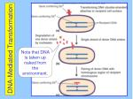 dna mediated transformation