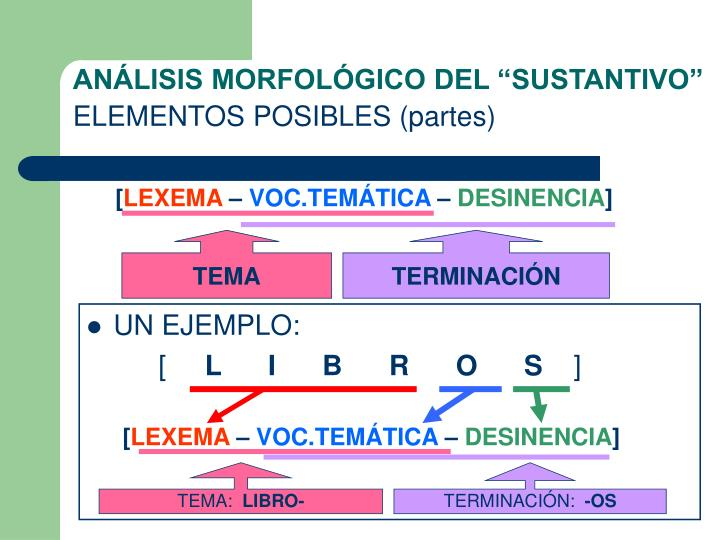An lisis morfol gico del sustantivo elementos posibles partes