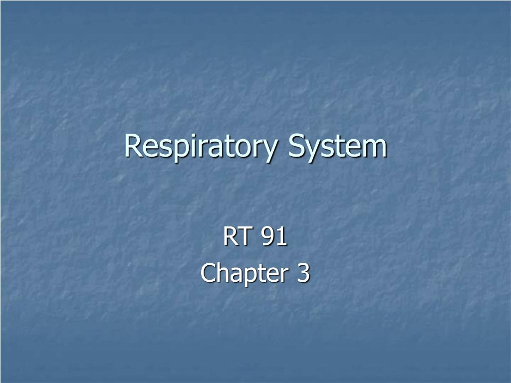 respiratory system l.