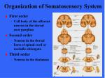organization of somatosensory system6