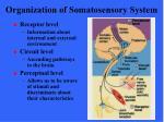 organization of somatosensory system8