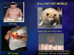 it s a fat fat world