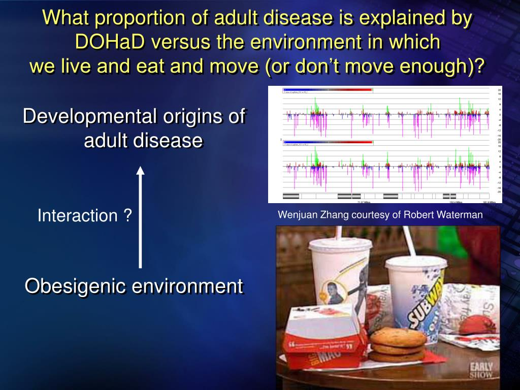 What proportion of adult disease is explained by DOHaD versus the environment in which