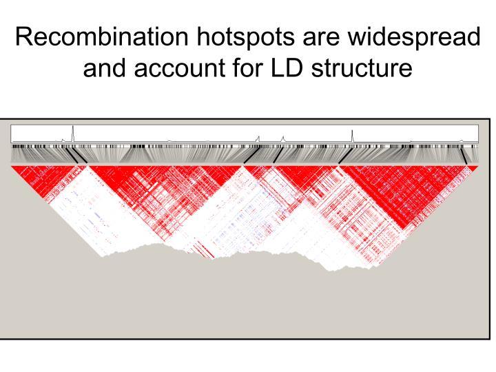 Recombination hotspots are widespread