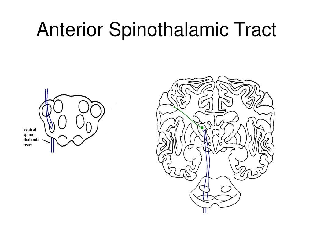 Anterior Spinothalamic Tract