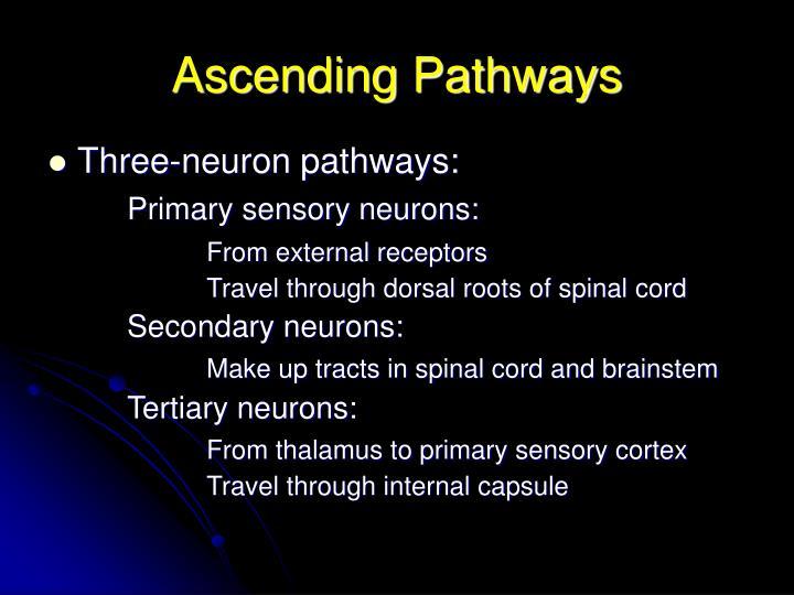 Ascending pathways2
