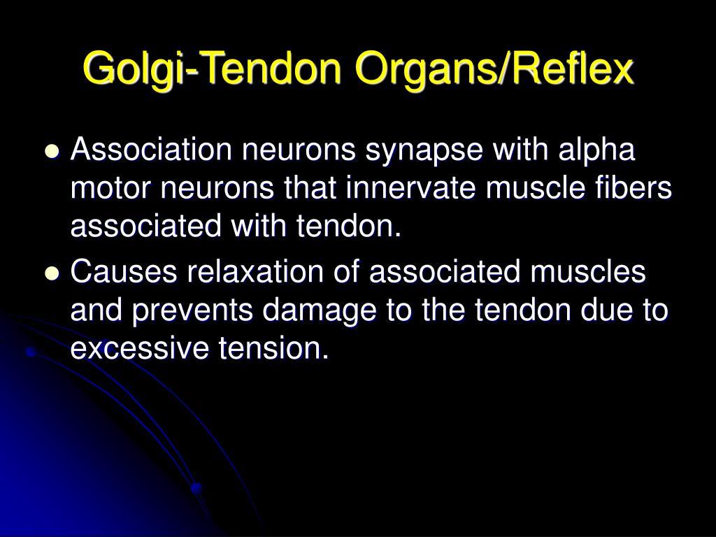 Golgi-Tendon Organs/Reflex