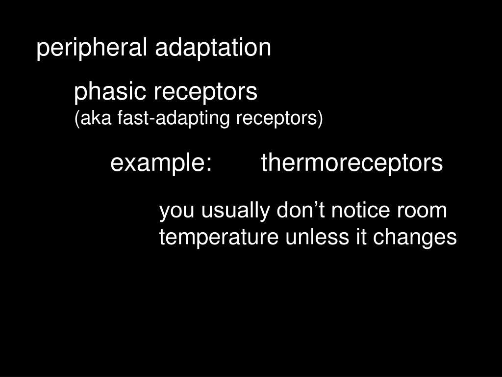 peripheral adaptation