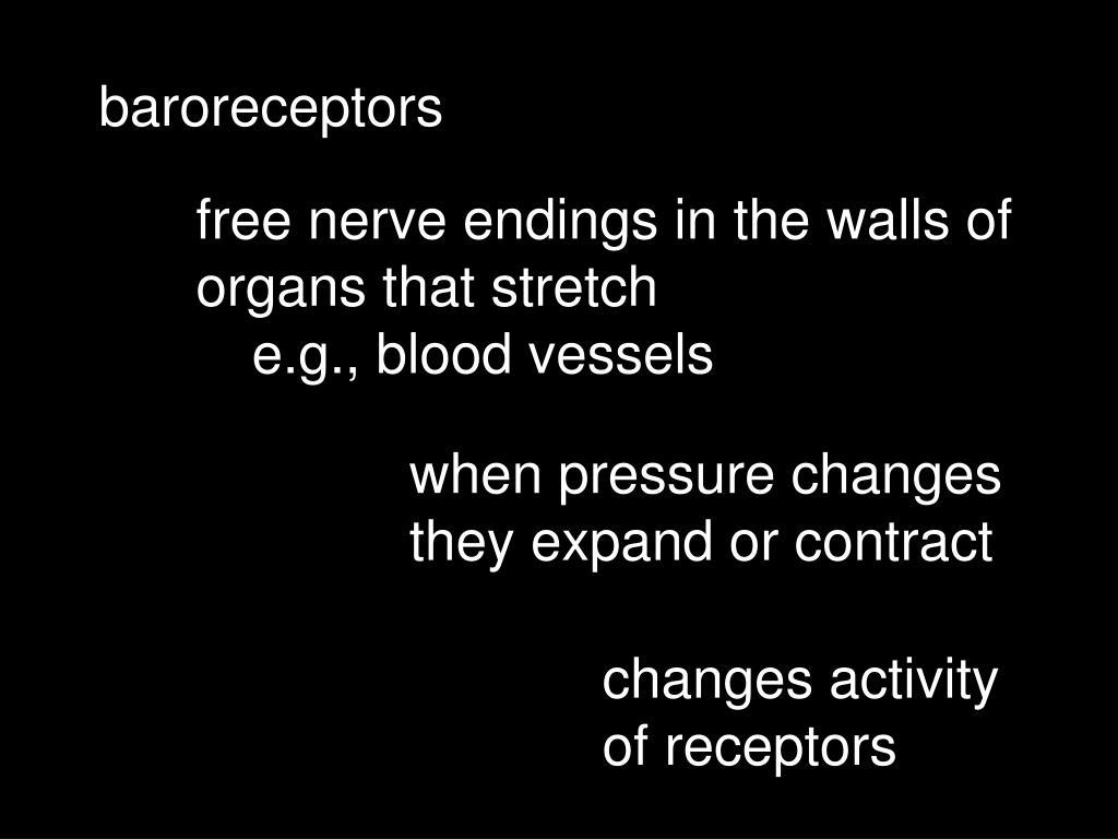 baroreceptors