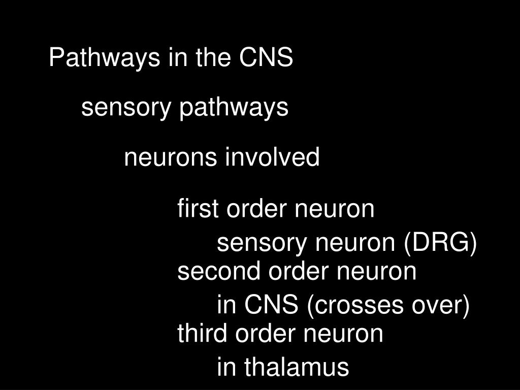 Pathways in the CNS