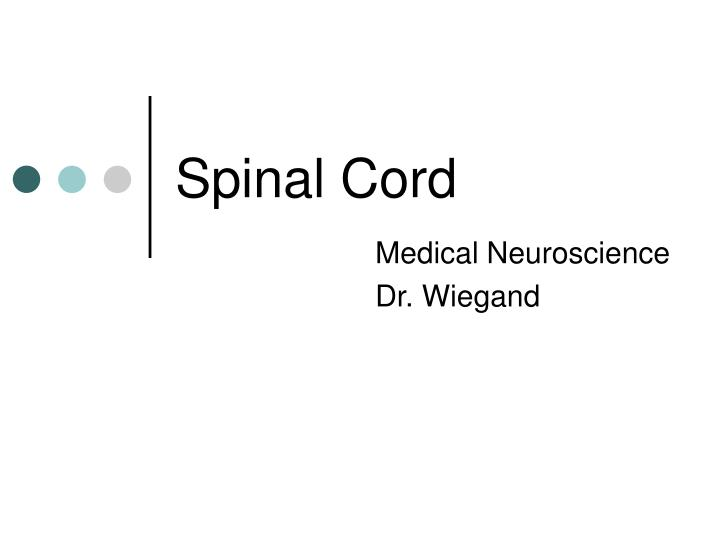 spinal cord n.