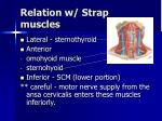 relation w strap muscles