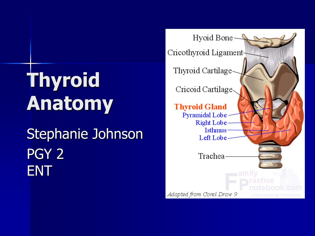 Ppt Thyroid Anatomy Powerpoint Presentation Free Download Id