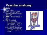 vascular anatomy17