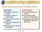 what organizational culture does