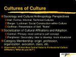 cultures of culture