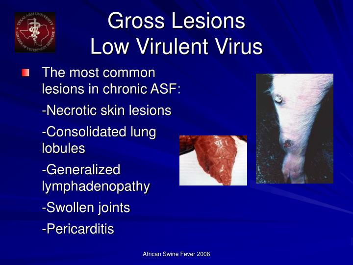 Gross Lesions