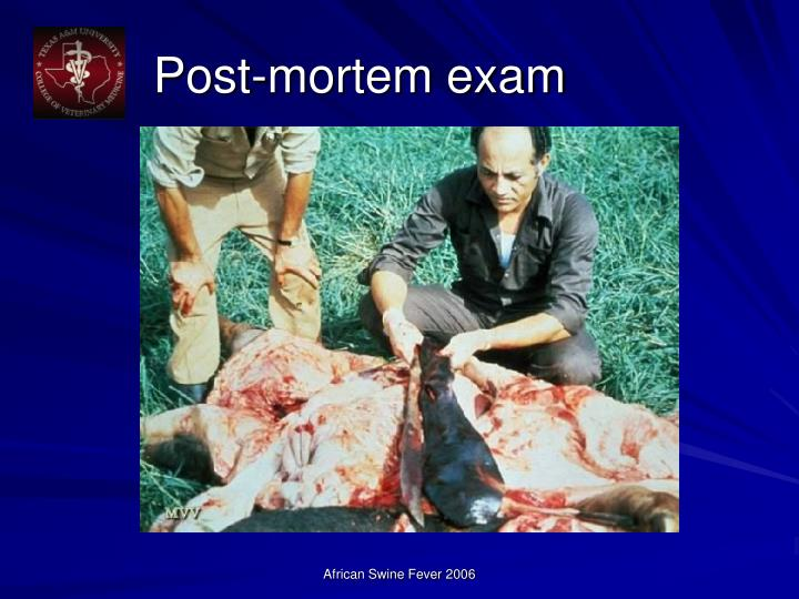 Post-mortem exam
