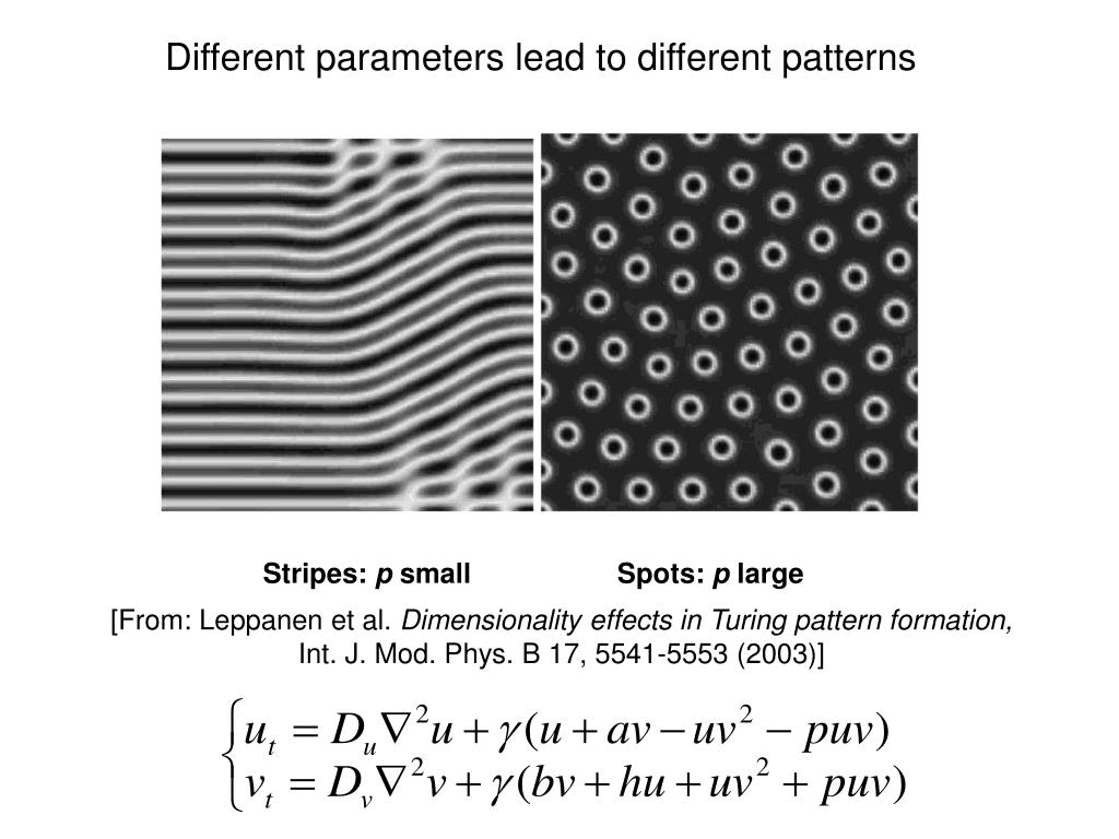 Different parameters lead to different patterns