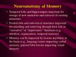 neuroanatomy of memory