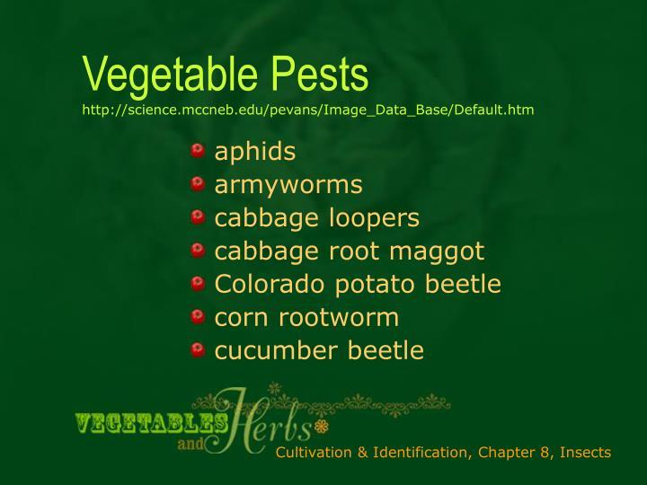 Vegetable pests http science mccneb edu pevans image data base default htm