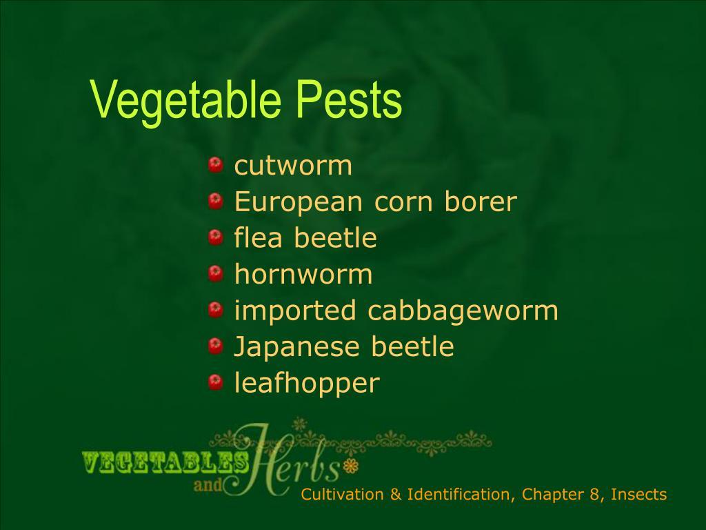 Vegetable Pests