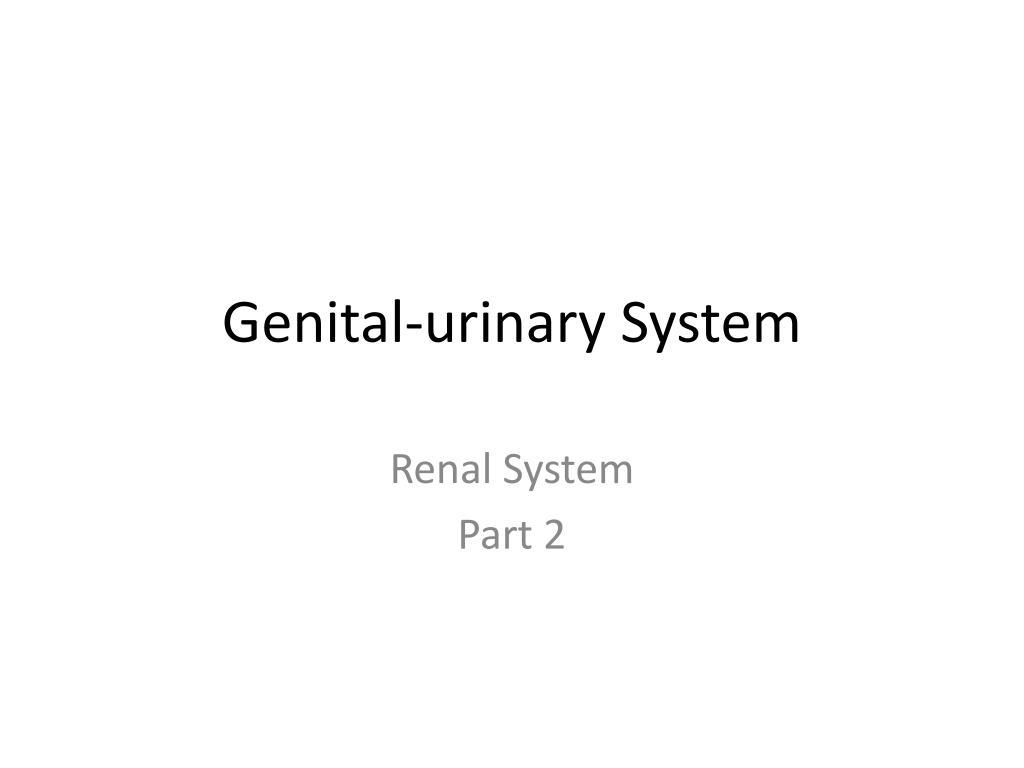 genital urinary system l.