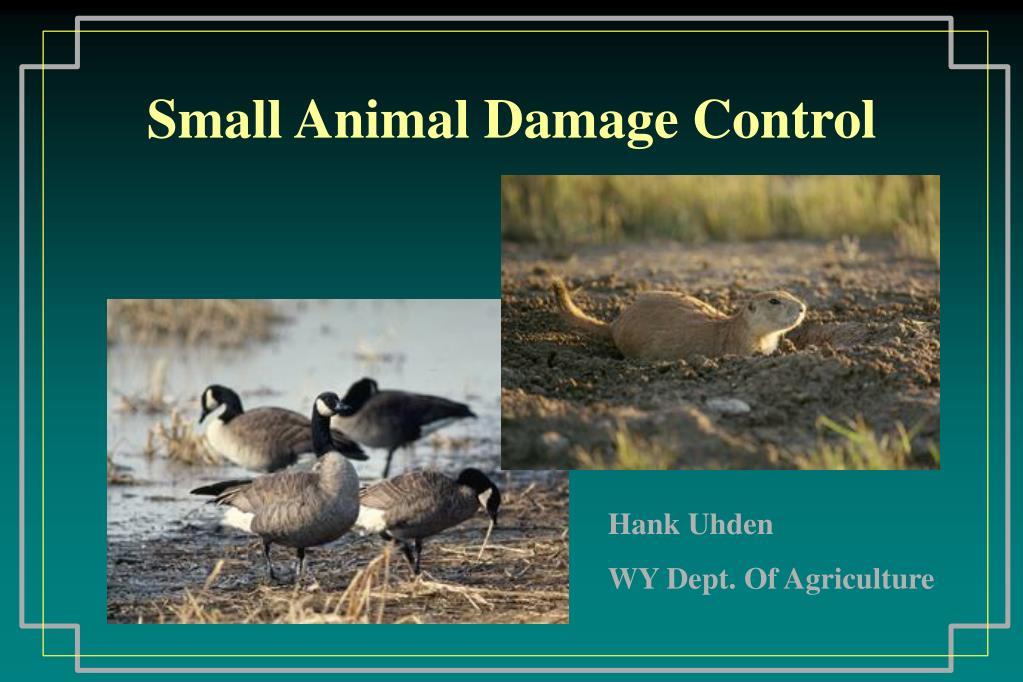 small animal damage control l.