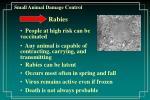 small animal damage control43