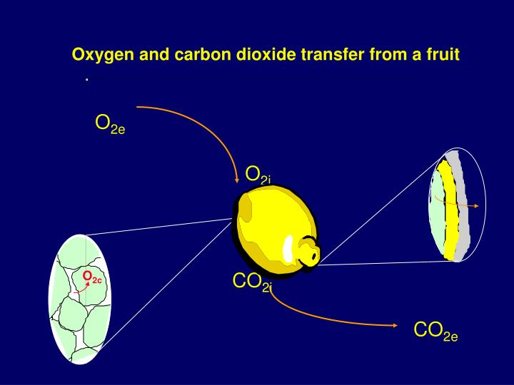 Oxygen and carbon dioxide transfer from a fruit