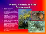 plants animals and the environment