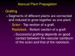 asexual plant propagation24
