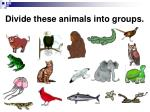 divide these animals into groups