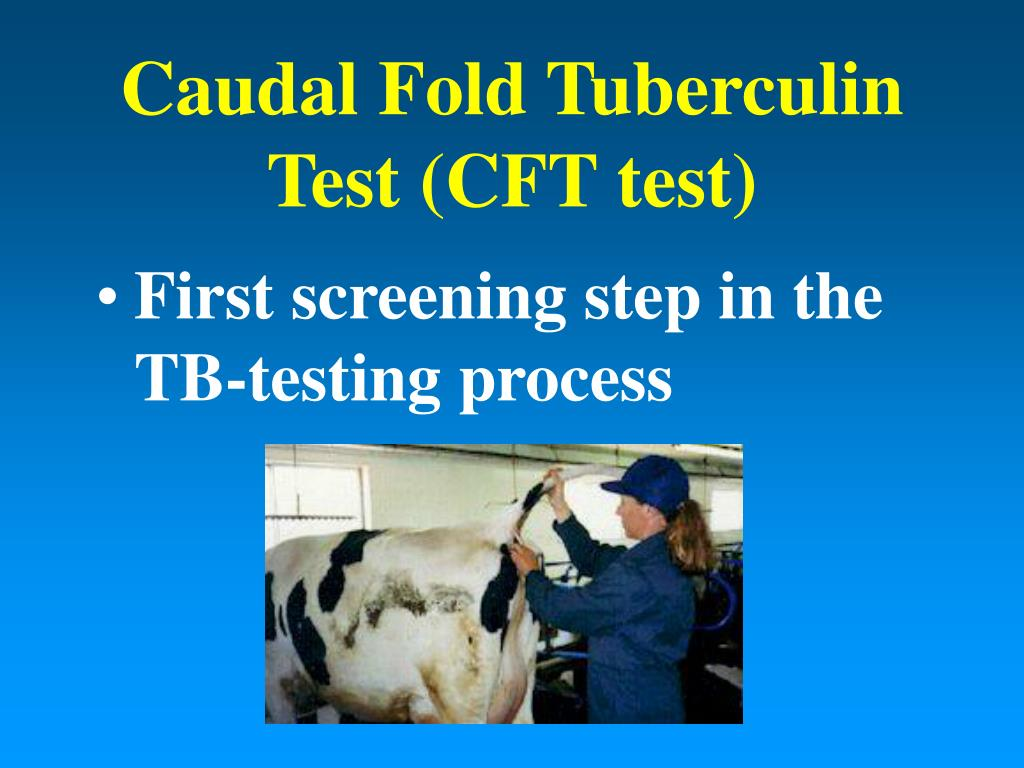 Caudal Fold Tuberculin Test (CFT test)