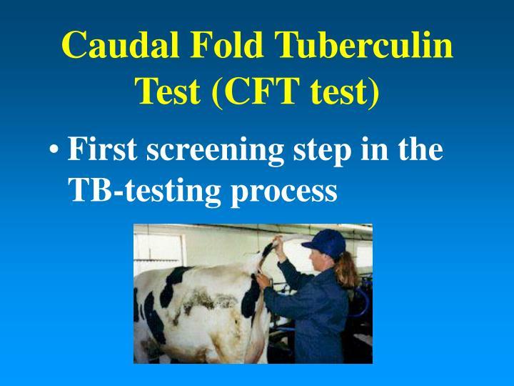 Caudal fold tuberculin test cft test