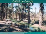 oasis de ouargla