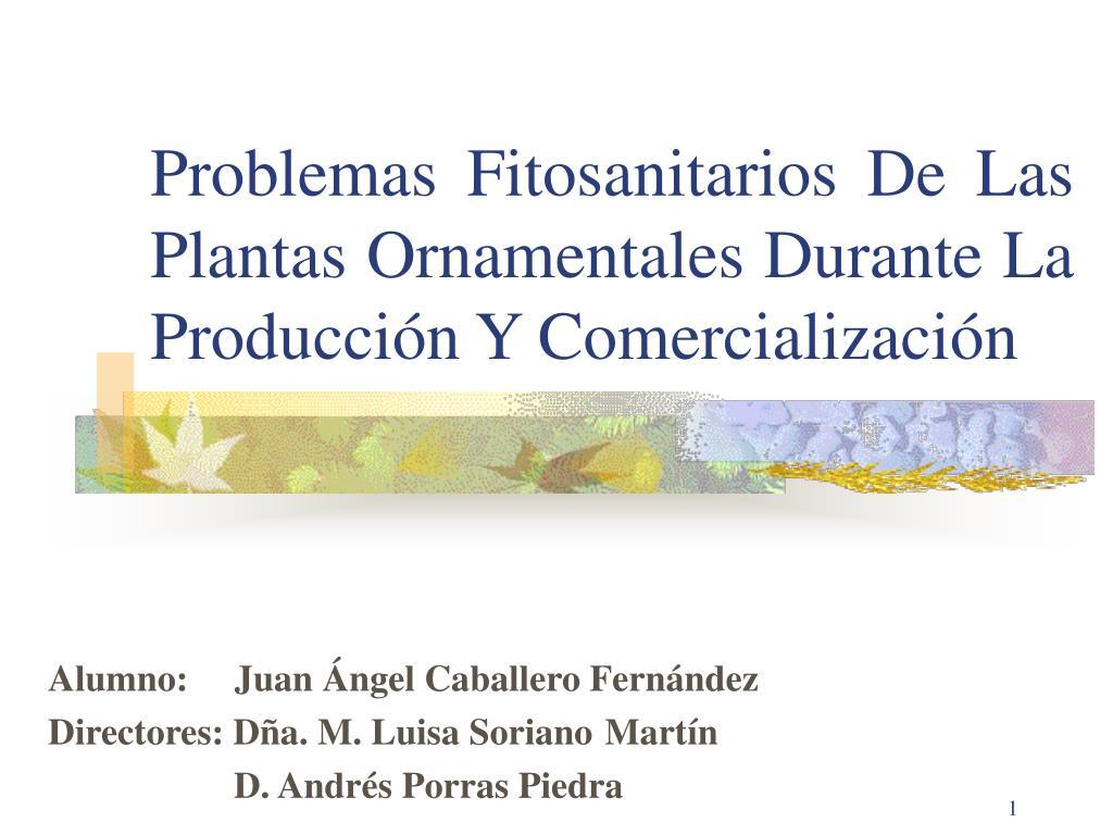 problemas fitosanitarios de las plantas ornamentales durante la producci n y comercializaci n l.