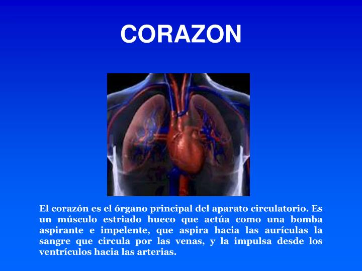 PPT - ANATOMIA Y FISIOLOGIA CARDIACA PowerPoint Presentation - ID:178699
