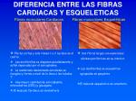 diferencia entre las fibras cardiacas y esqueleticas
