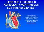 por que el musculo auricular y ventricular son independientes